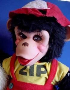 Rushton monkey Zip and his girlfriend b face